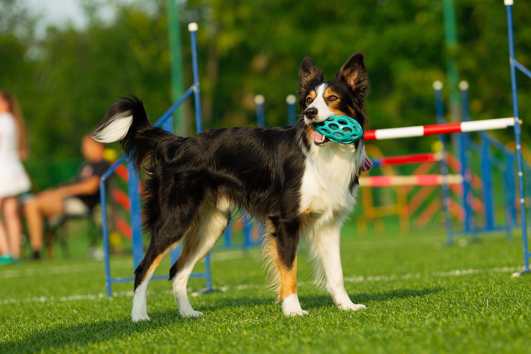 Hundesport Bodensee