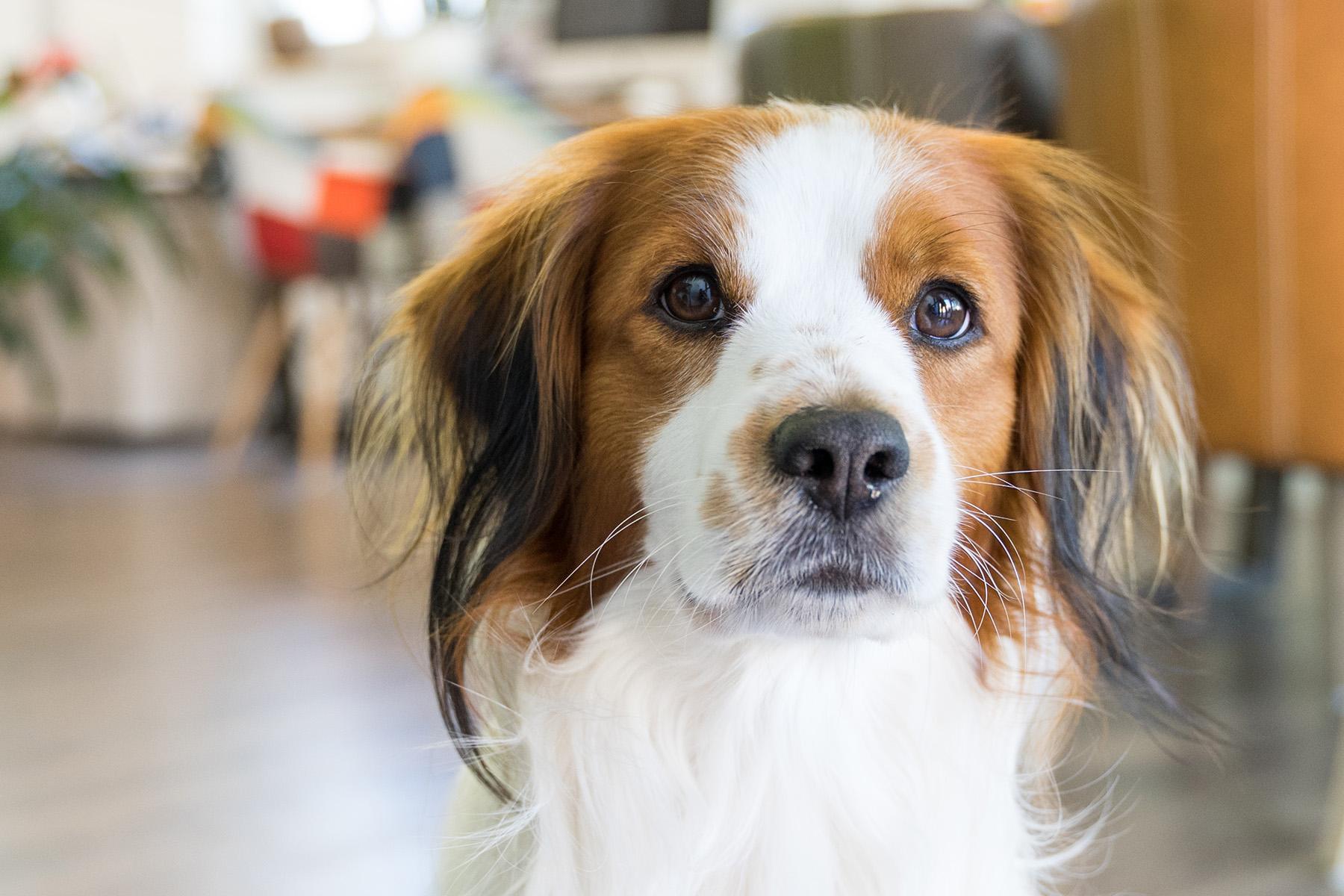 Trainer für Hundesport gesucht